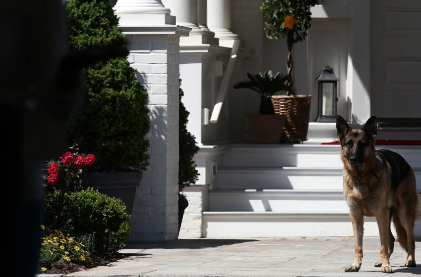 WASHINGTON, DC - MAY 10: Vice President Joe Biden's dog, Champ, stands during speechs during a Joining Forces service event at the Vice President's residence at the Naval Observatory May 10, 2012 in Washington, DC. U.S. first lady Michelle Obama and Biden joined with Congressional spouses to assemble Mother's Day packages that deployed troops have requested to be sent to their mothers and wives at home. (Photo by Win McNamee/Getty Images)