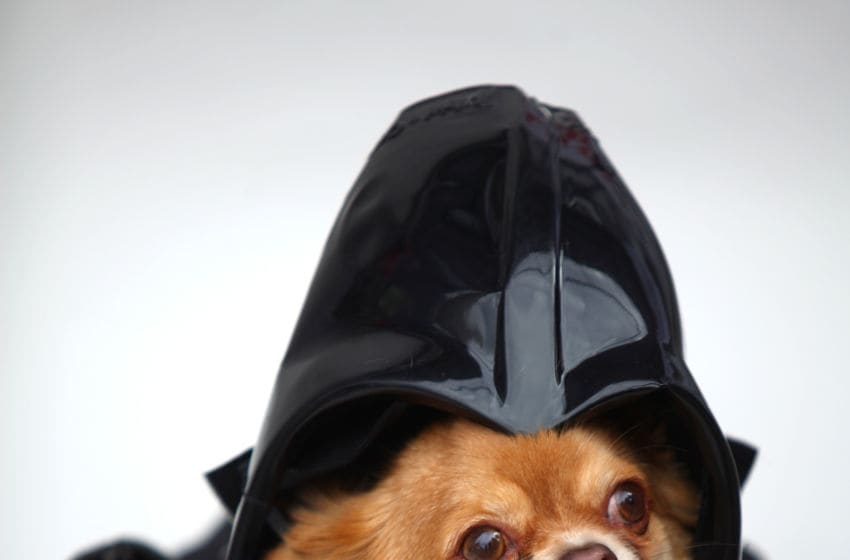 LONDON, ENGLAND - MAY 05: Harvey, a long-haired Chihuahua is dressed up as the character Darth Vader from the film Star Wars on May 5, 2013 in London, England. Enthusiasts gathered at the Picture House in Stratford to parade their dogs dressed up as famous Sci-Fi characters as part a London-wide event called Sci-Fi London. (Photo by Jordan Mansfield/Getty Images)