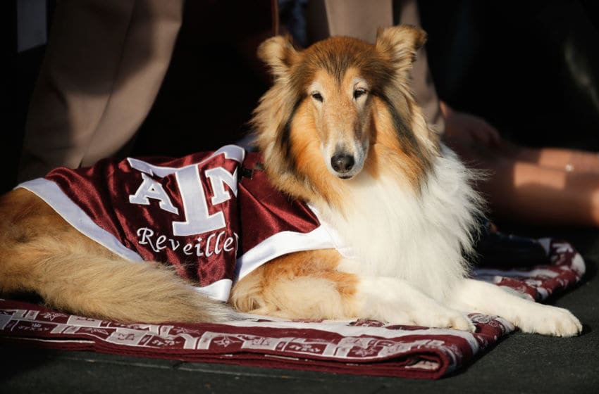 COLLEGE STATION, TX - NOVEMBER 09: Reveille, the official mascot of Texas A&M, sits near the end zone during the game against the Mississippi State Bulldogs at Kyle Field on November 9, 2013 in College Station, Texas. (Photo by Scott Halleran/Getty Images)