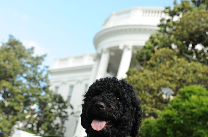 WASHINGTON, DC - MAY 17: Obama family dog Sunny takes a walk on the South Lawn of the White House on May 17, 2014 in Washington, DC. Sunny joined the Obama family on August 19, 2013. (Photo by Leslie E. Kossoff-Pool/Getty Images)
