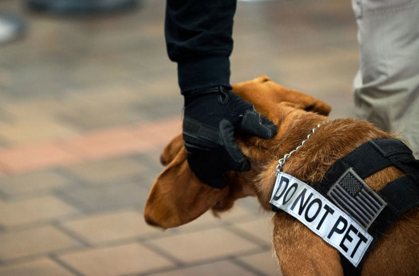 COVID-19 detection dogs (Photo by Bryan Thomas/Getty Images)