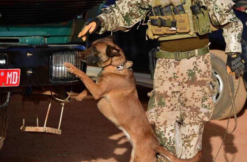 GAO, MALI - MARCH 06: A soldier and a dog of the Bundeswehr, the German armed forces, search for hidden explosives at car and trucks outside Camp Castor during sunrise on March 6, 2017 in Gao, Mali. The Bundeswehr currently holds three Belgian Shepherds at Camp Castor and supports the Protection Force. U.N.-led MINUSMA (United Nations Multidimensional Integrated Stabilization Mission) troops are assisting the Malian government in its struggle against rebels that include a Tuareg movement (MNLA) and several Islamic armed groups, among them Al-Qaeda, in the north of Mali. Rebels have conducted a series of terror attacks to destabilize the current government in recent years. The Bundeswehr has committed helicopters and 750 soldiers to the MINUSMA mission as well as 147 soldiers to the EUTM mission (European Trainings Mission Mali) to train government troops. In mid-April the Bundeswehr is to deploy four «Tiger«combat helicopter. (Photo by Alexander Koerner/Getty Images)