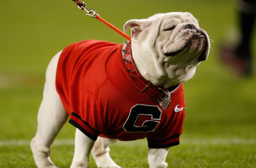 ATHENS - NOVEMBER 14: Georgia Bulldogs mascot UGA VII stands on the field before the game between the Georgia Bulldogs and the Auburn Tigers at Sanford Stadium on November 14, 2009 in Athens, Georgia. The white English bulldog, who served as the University's football team mascot for nearly two seasons, died November 19, 2009 of heart-related causes, according to published reports. (Photo by Mike Zarrilli/Getty Images)