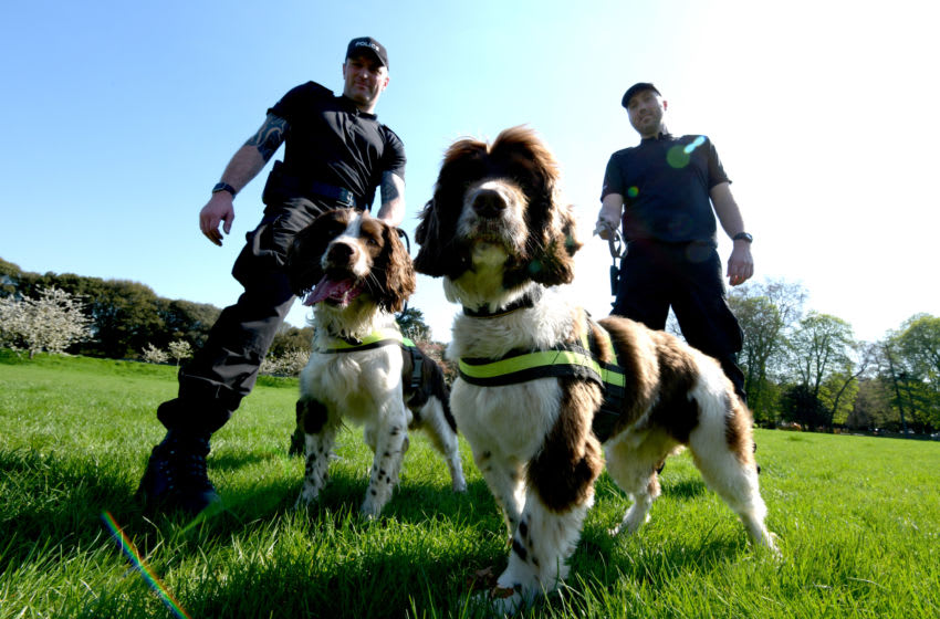 WINDSOR, ENGLAND - APRIL 19: PC Jim Hyman (tattoos) with Yury and PC Paul Shutler with Gus in Home Park, part of Thames Valley Police Joint Operations Dog Unit out in Windsor ahead of next months wedding of His Royal Highness Prince Harry and Ms Meghan Markle on April 19, 2018 in Windsor, England. (Photo by Geoff Pugh - WPA Pool/Getty Images)