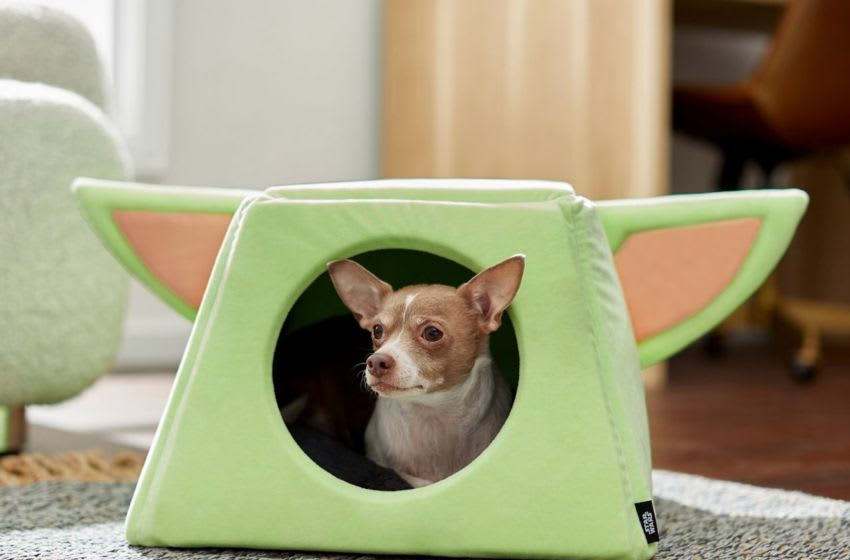 Discover The Child pet bed from the Disney Collection at Chewy.