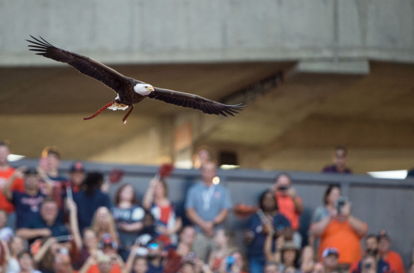 One of the greatest traditions in sports: Auburn's eagle, Spirit, takes flight before the Alabama State game. (Photo by Michael Chang/Getty Images)