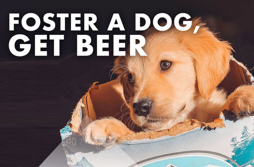 Foster a dog, get a Busch, photo provided by Busch Beer