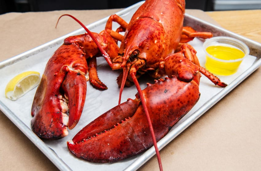 Cooked Lobster from The Lobster Place. Image Courtesy The Lobster Place, Michael Marquand