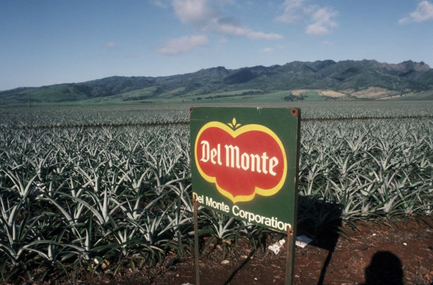 OAHU, HAWAII - 2000: A Del Monte pineapple field on the outskirts of Honolulu is viewed in this 2000 Oahu, Hawaii, photo. (Photo by George Rose/Getty Images)