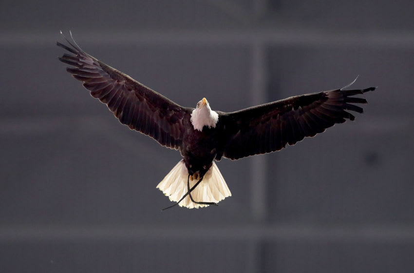 ARLINGTON, TEXAS - DECEMBER 29: A bald eagle performs a fly over inside the stadium during the College Football Playoff Semifinal Goodyear Cotton Bowl Classic between the Notre Dame Fighting Irish and the Clemson Tigers at AT&T Stadium on December 29, 2018 in Arlington, Texas. (Photo by Tom Pennington/Getty Images)