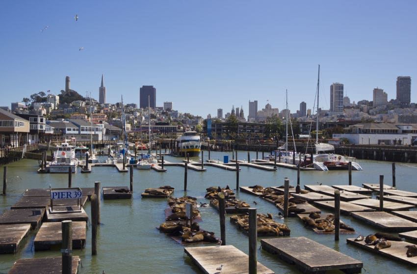 UNITED STATES - APRIL 26: California sea lions lounging on the docks at Fisherman's Wharf. Fisherman's Wharf, San Francisco, California. (Photo by Mike Theiss/National Geographic/Getty Images)