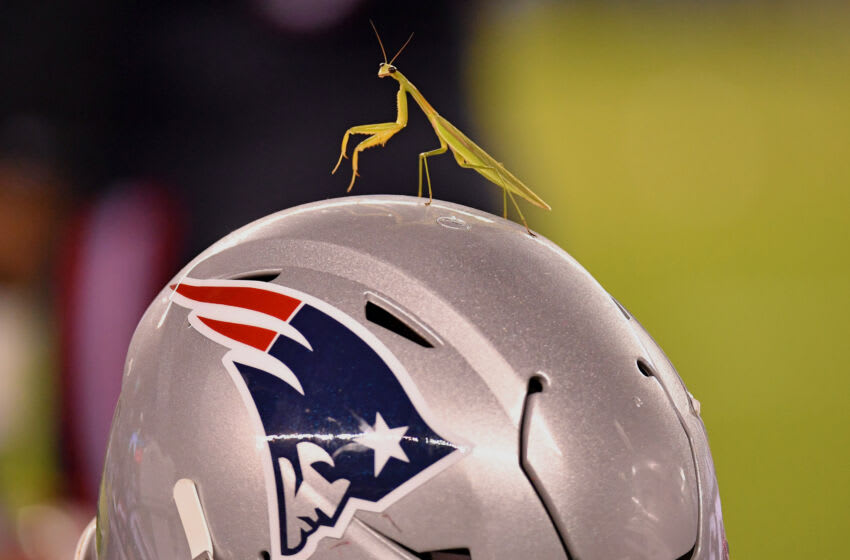 Aug 19, 2021; Philadelphia, Pennsylvania, USA; A praying mantis sits atop a New England Patriots helmet on the sidelines against the Philadelphia Eagles during the fourth quarter at Lincoln Financial Field. Mandatory Credit: Eric Hartline-USA TODAY Sports