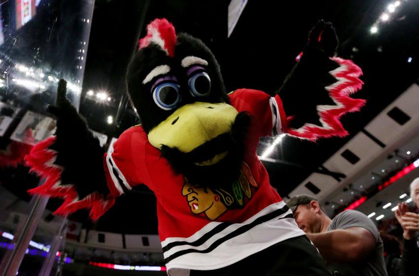 Chicago Blackhawks mascot 'Tommy Hawk' (Photo by Jonathan Daniel/Getty Images)