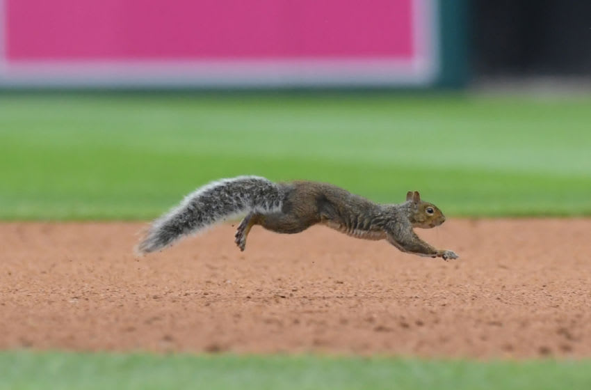 DETROIT, MI - SEPTEMBER 09: A squirrel runs across the field at Comerica Park during the game between the Detroit Tigers and the St. Louis Cardinals on September 9, 2018 in Detroit, Michigan. The Cardinals defeated the Tigers 5-2. (Photo by Mark Cunningham/MLB Photos via Getty Images)