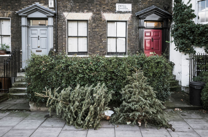 LONDON, ENGLAND - JANUARY 05: Discarded Christmas trees lie outside houses in Angel on January 5, 2018 in London, England. In the lead up to Christmas a pine tree is the centre point of a home, the pride and joy of the family, decorated with beautiful lights and decorations guarding presents until Christmas Day morning. Traditionally, trees and decorations are taken down on Twelfth Night, leaving these once loved and cherished trees serving no purpose and finding themselves cast out into the street ending up as Lonely Christmas Trees. (Photo by Gareth Cattermole/Getty Images)