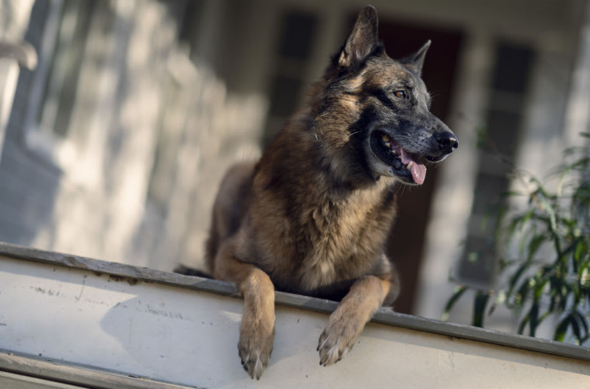 Dog - The Walking Dead _ Season 10, Episode 21 - Photo Credit: Eli Ade/AMC