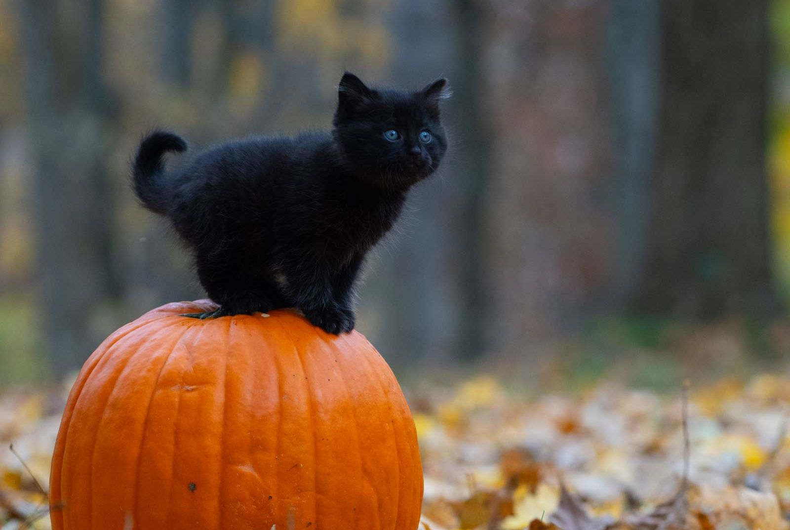 Halloween Party Traditions.15 Spooky Halloween Traditions And Their Origins Mental Floss