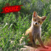 Can You Name These Baby Animals?