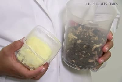 Insect butter could bake the world by swarm.