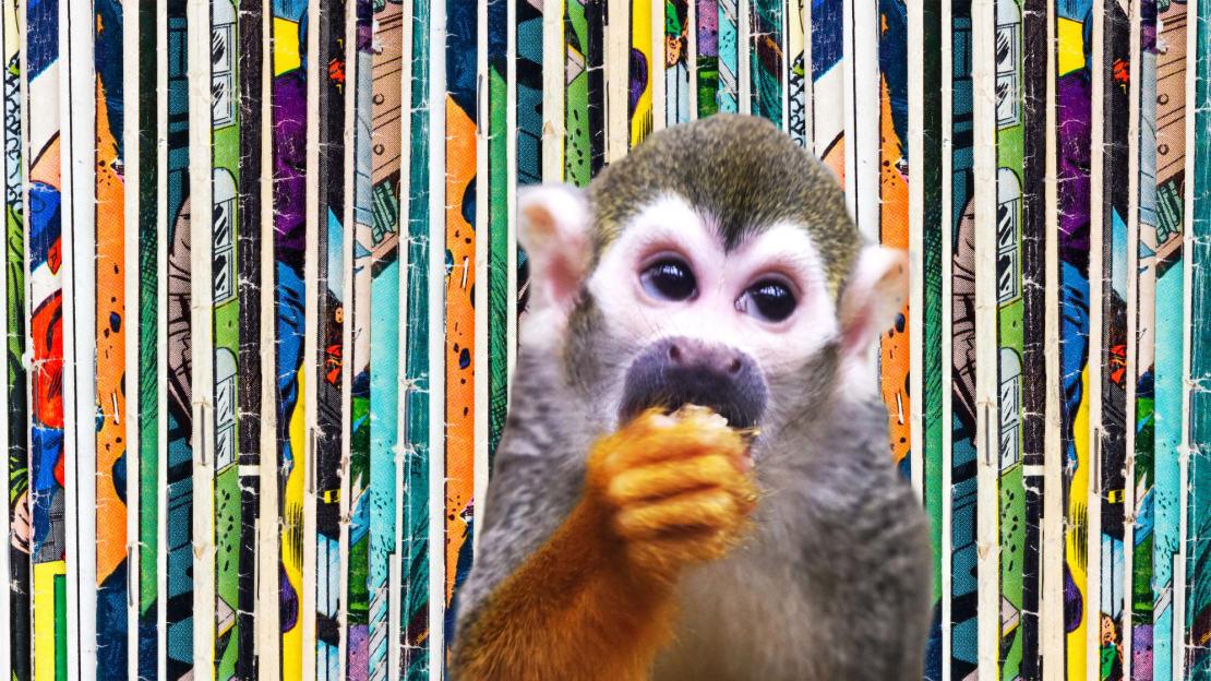 deberarr/iStock via Getty Images (Background); kata716/iStock via Getty Images (Monkey). Photo collage courtesy of Ken Ossea, Jr.