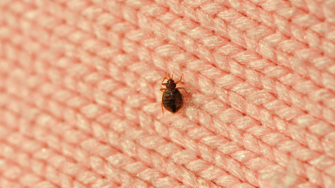 Don't Pour Alcohol on Your Bed Bugs—Try These Tips Instead | Mental