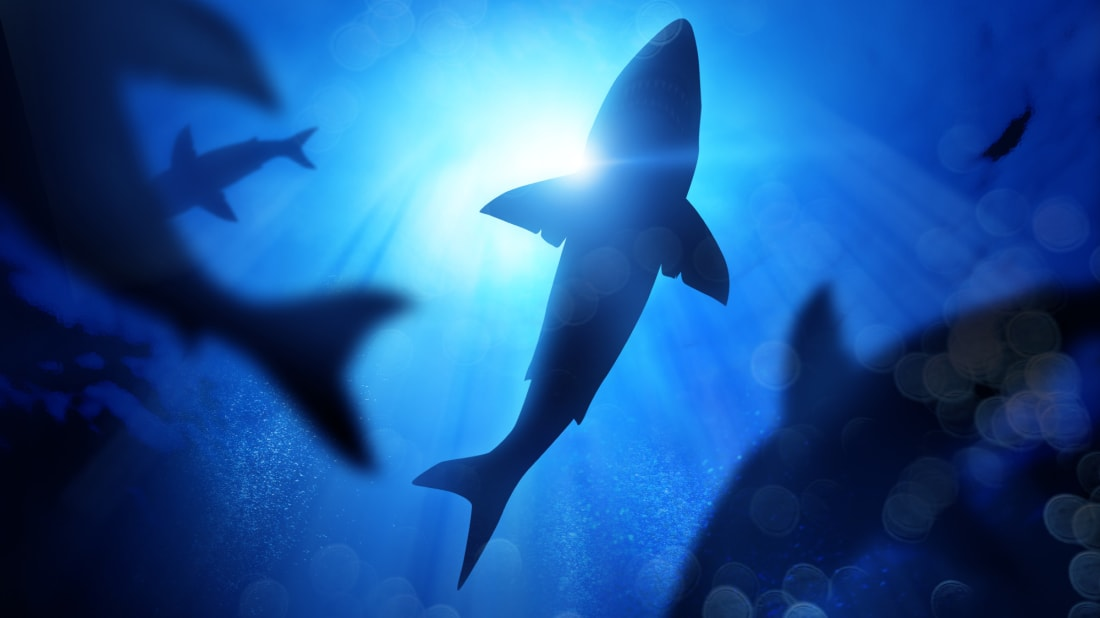 Great white sharks used prehistoric nurseries to protect their young.