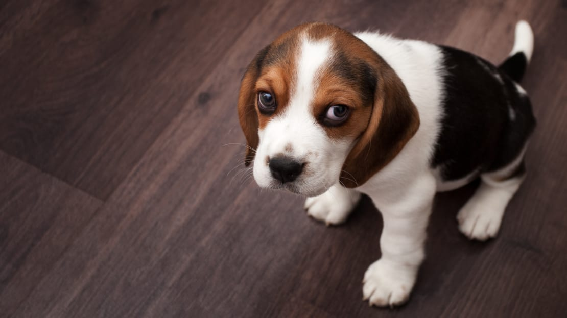 Dogs stare for a number of different reasons.