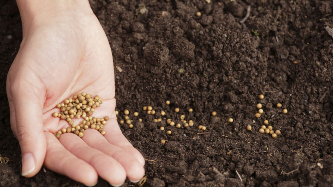 Mysterious seeds are showing up in mailboxes in at least seven states.