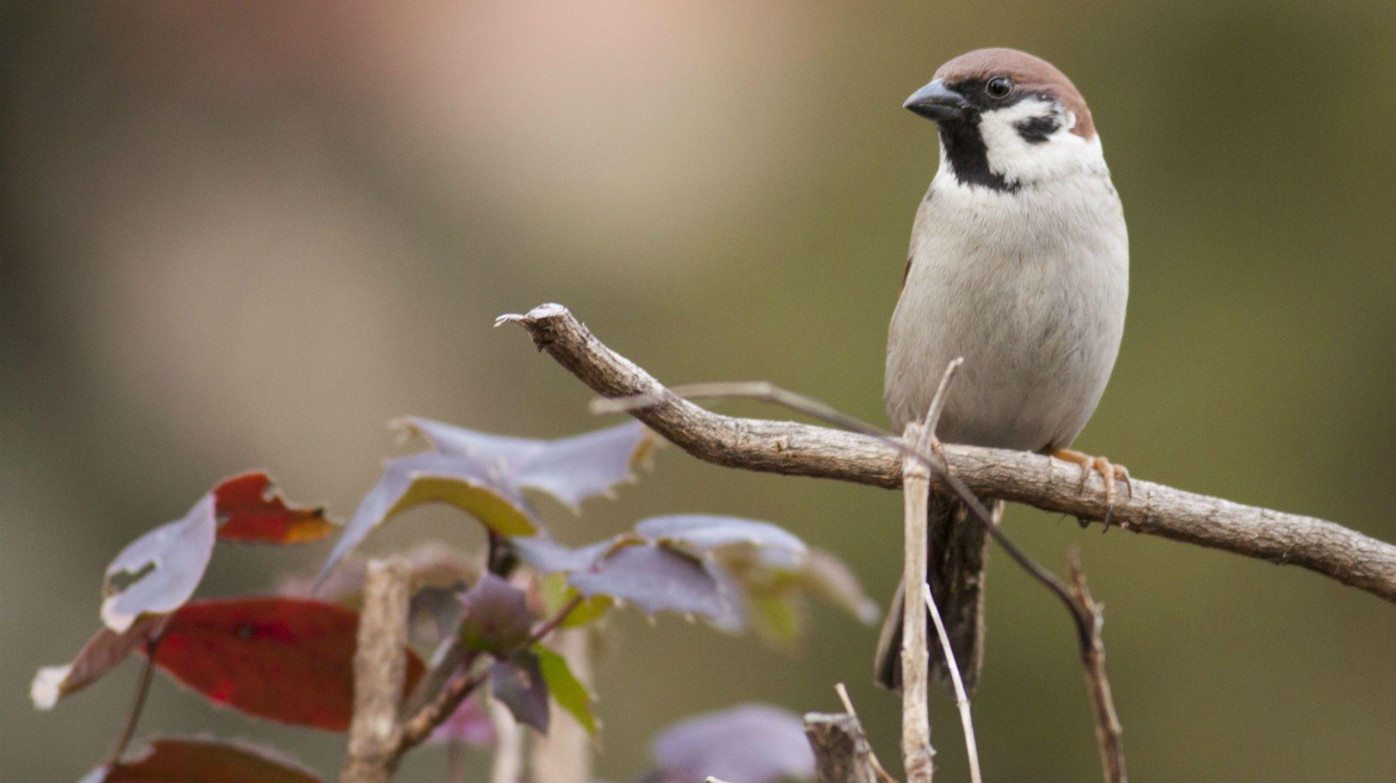 25 Domestic Bird Feathers