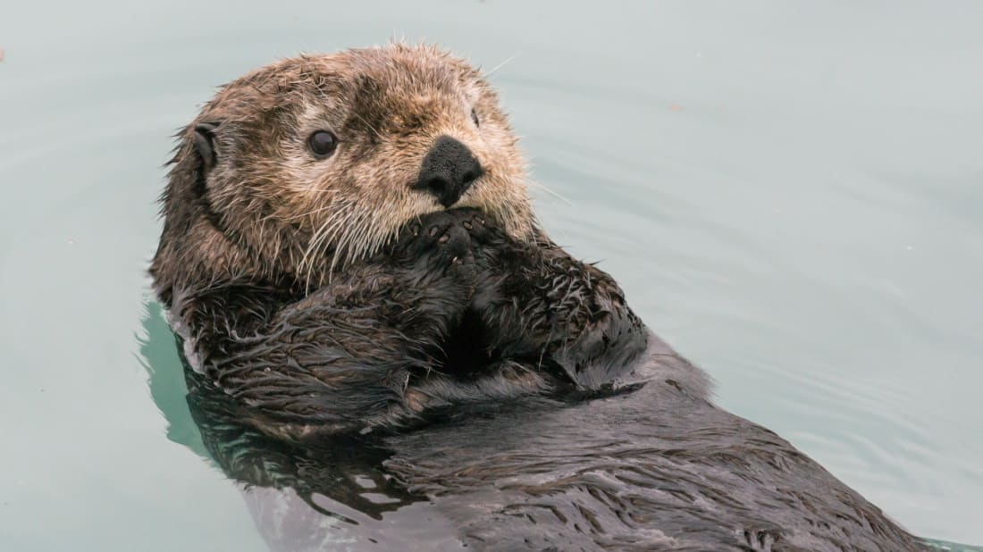 Otters continue to baffle scientists while remaining adorable.