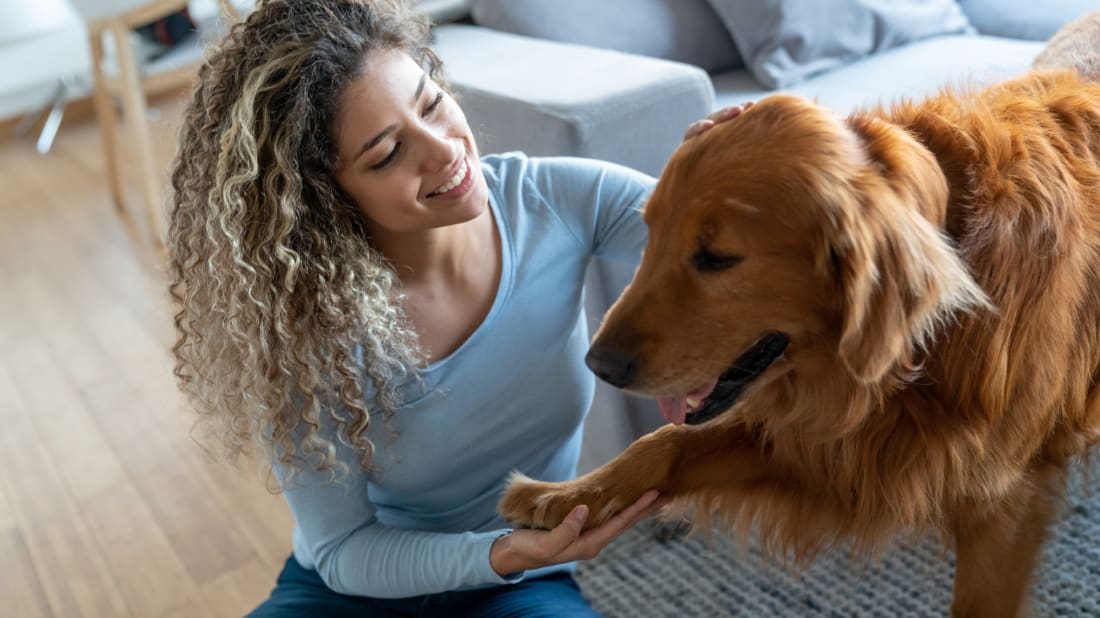 Dogs use physical contact for a lot of the same reasons humans do.