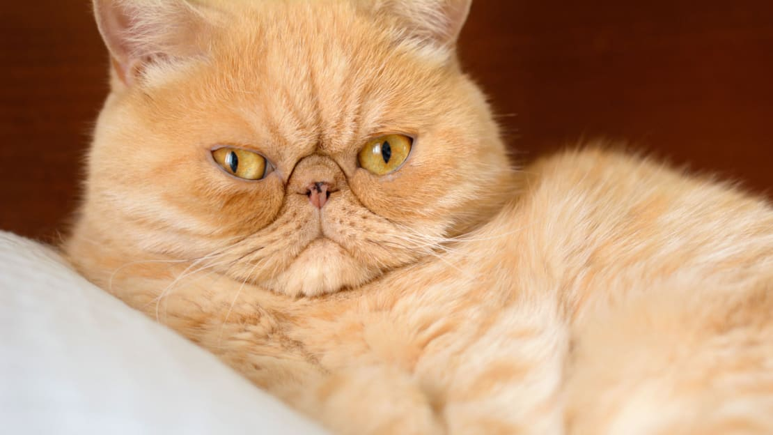 Cats can ruin a relationship before it even gets started, according to science.
