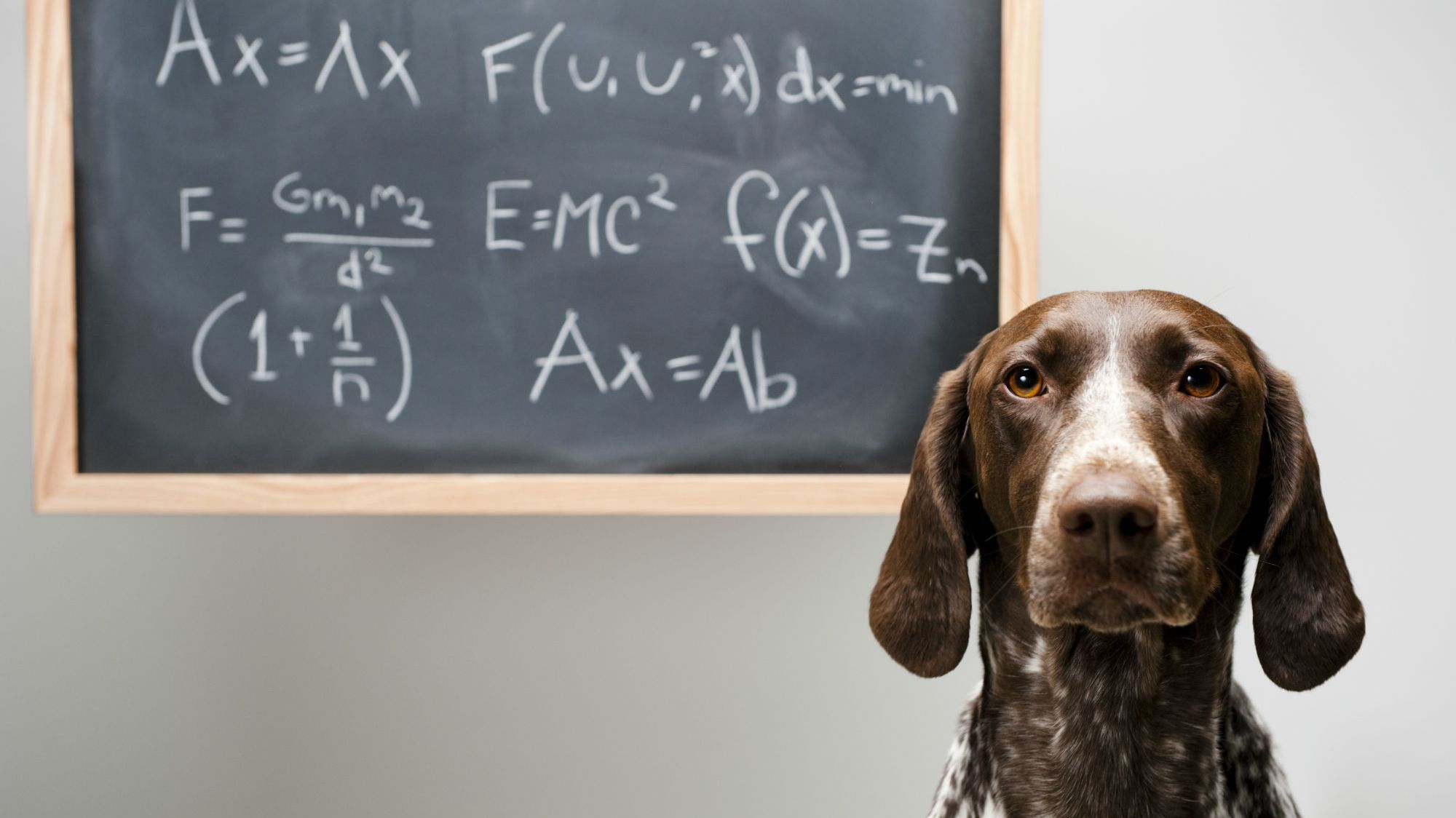 Science Finds a Better Way to Calculate 'Dog Years'