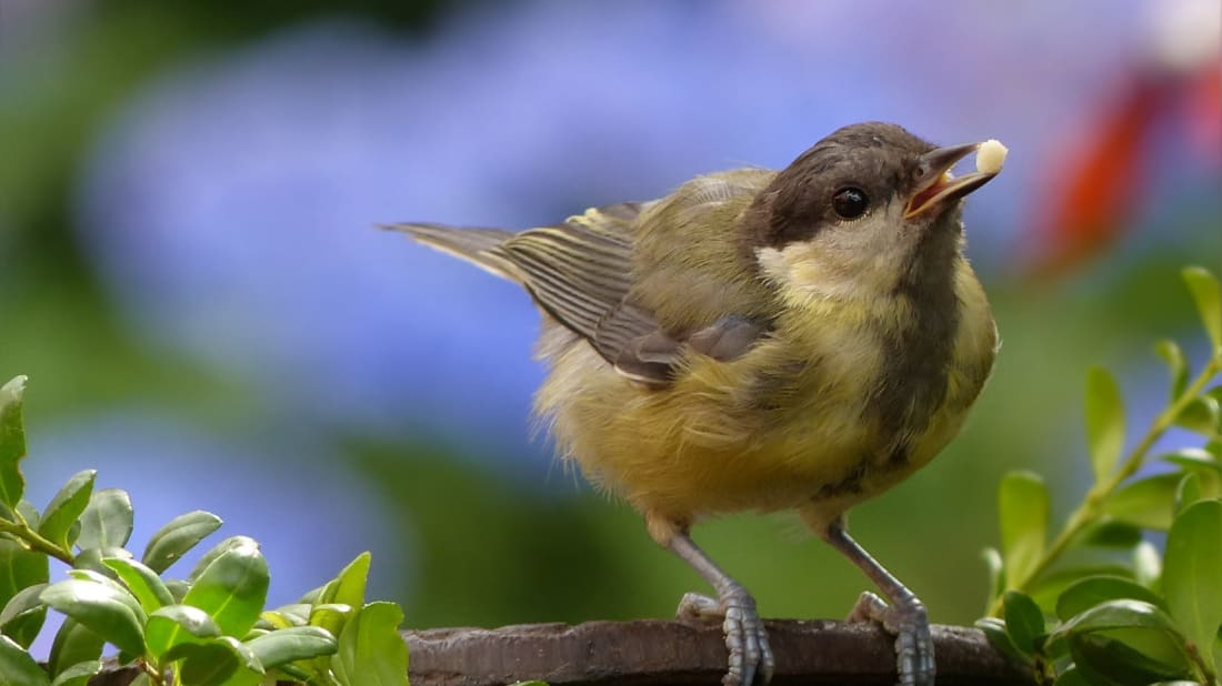 Slow-motion footage of birds eating is strangely fascinating.