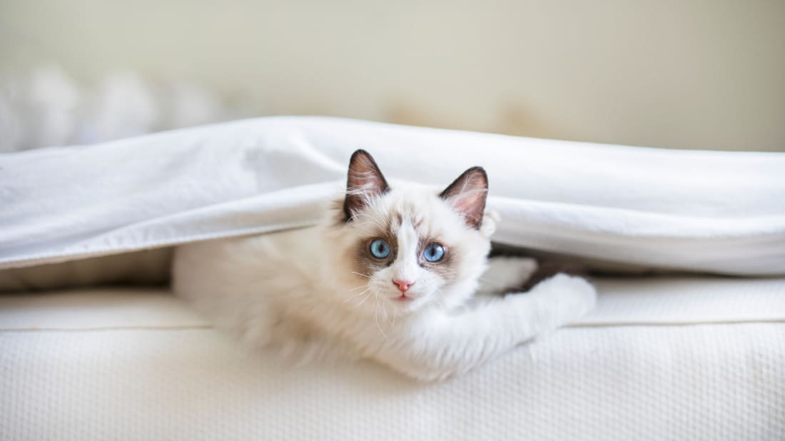 Are you sharing your bed with your cat, or is your cat sharing its bed with you?