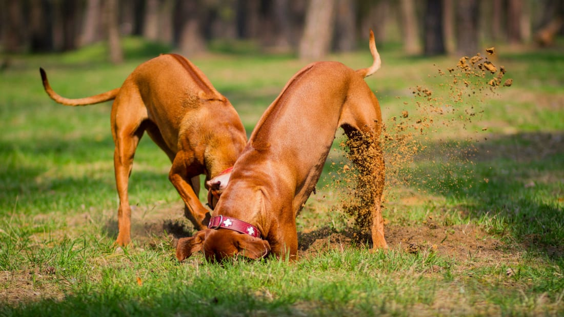 Why Do Dogs Kick Their Feet After They Poop?