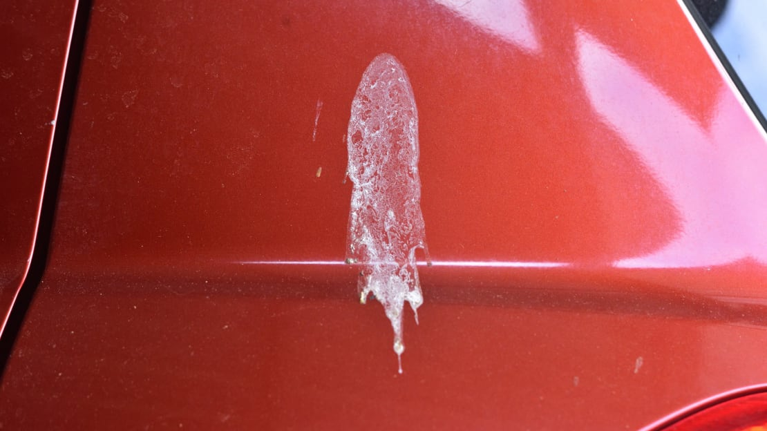 Birds are not respectful of cars.
