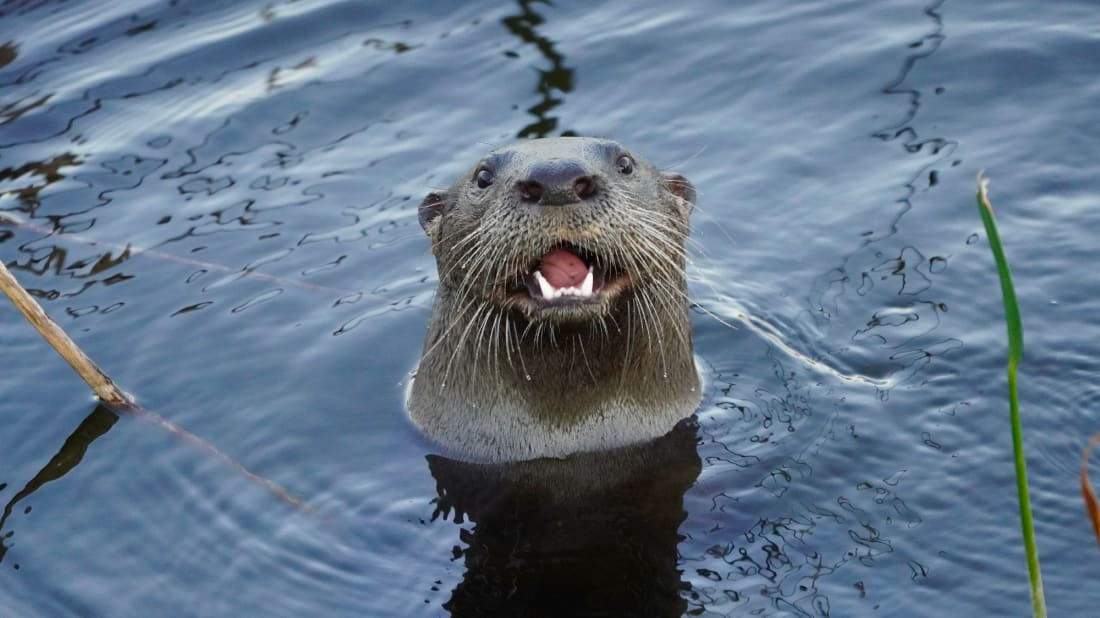 This is the scariest photo of a river otter we could find.