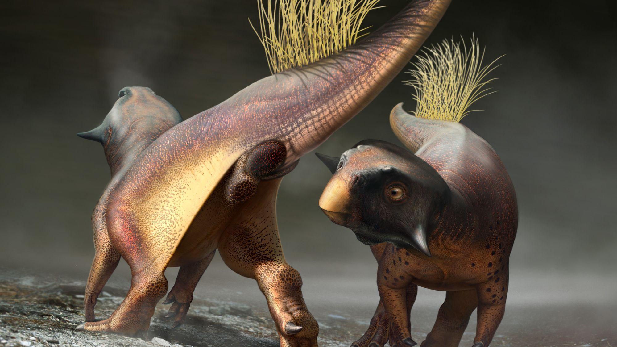 Paleontologists have reconstructed Butthole Dinosaur