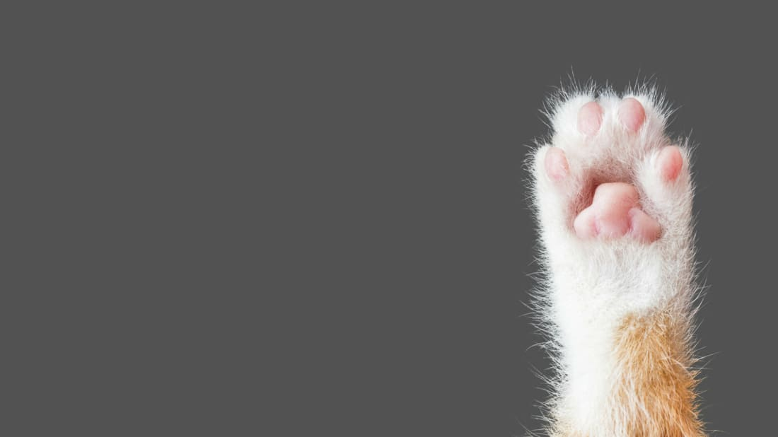 The Reason Some Cats Look Like They're Wearing Socks