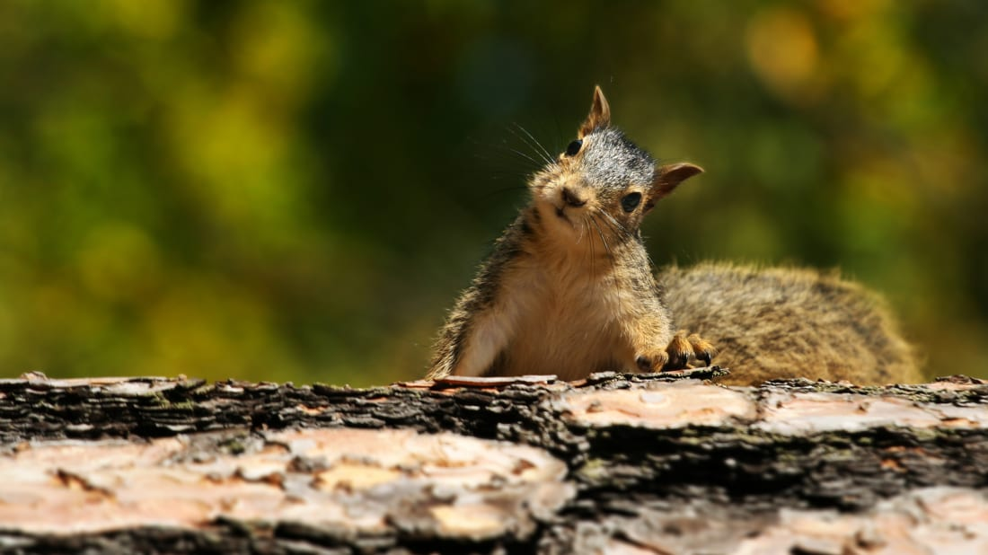 15 Squirrel Facts for Squirrel Appreciation Day