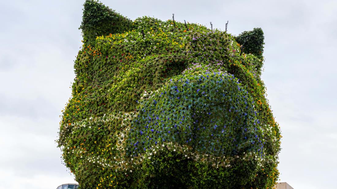 O filhote de cachorro do artista Jeff Koons agora usa uma máscara facial.