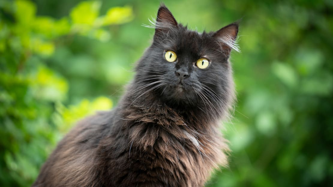 Black cats require a special approach when it comes to photography.