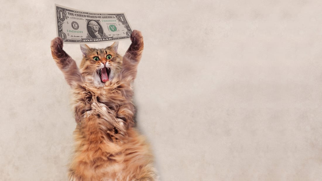 Cats can live large thanks to pet trusts.