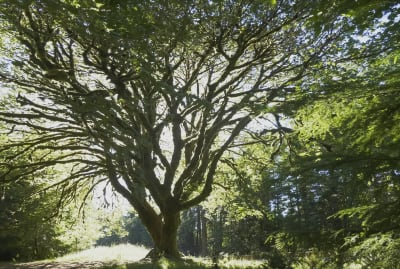 Tree DNA just made legal history.