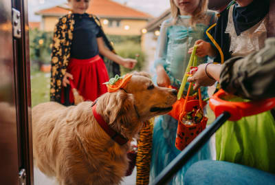 Halloween can be hazardous to your pet's health.