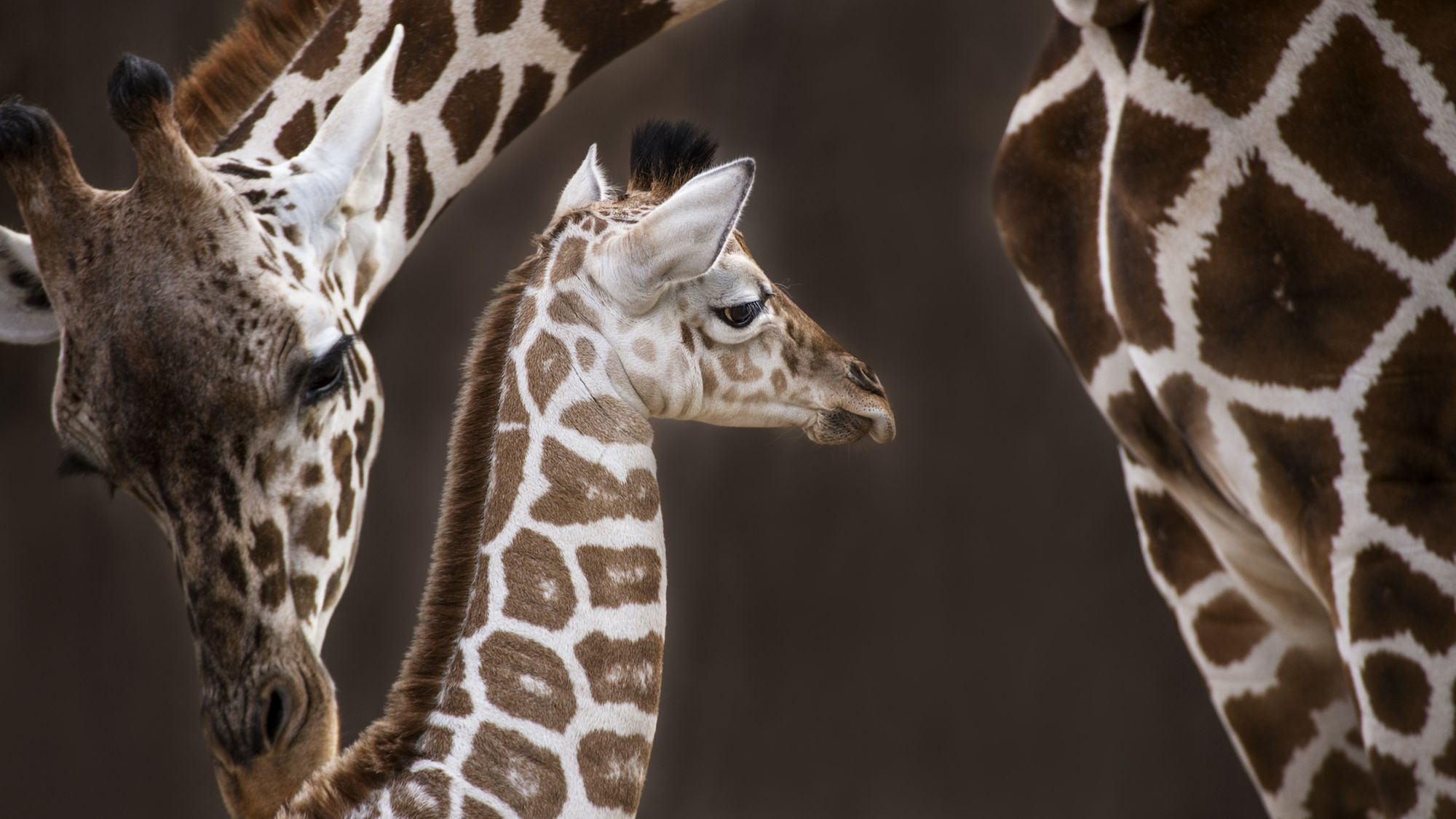 10 Notable Gestation Periods in the Animal Kingdom | Mental