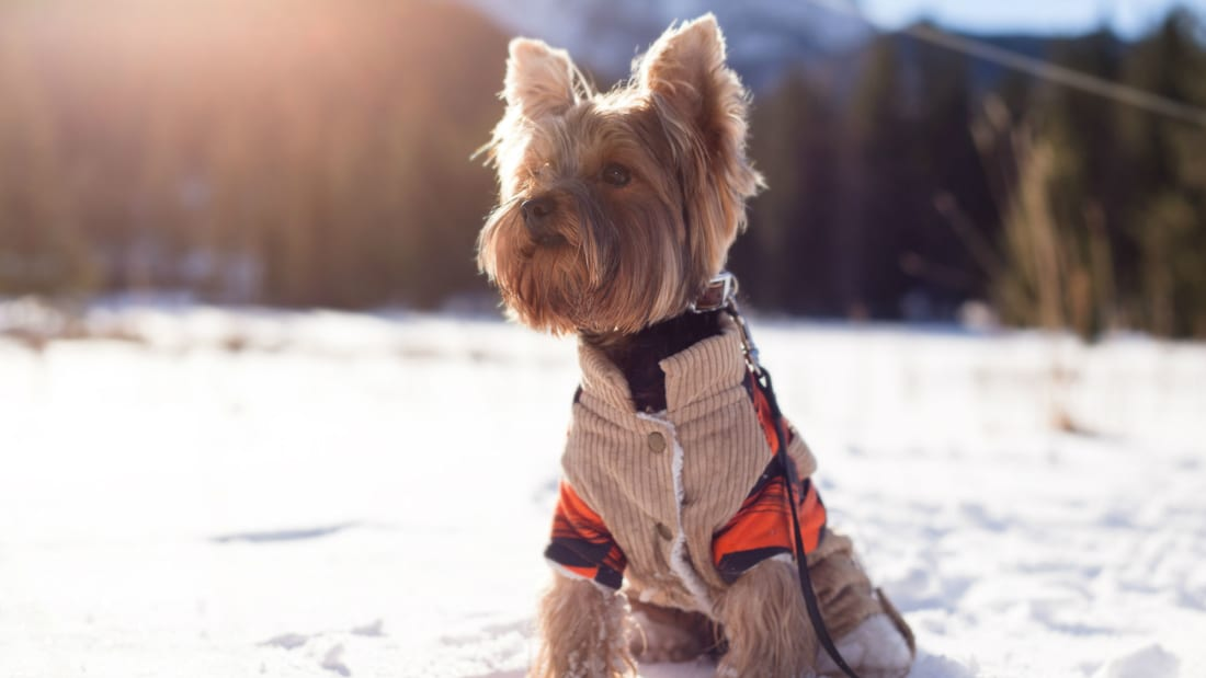 5 Tips for Safely Walking Your Dog in Cold Weather | Mental