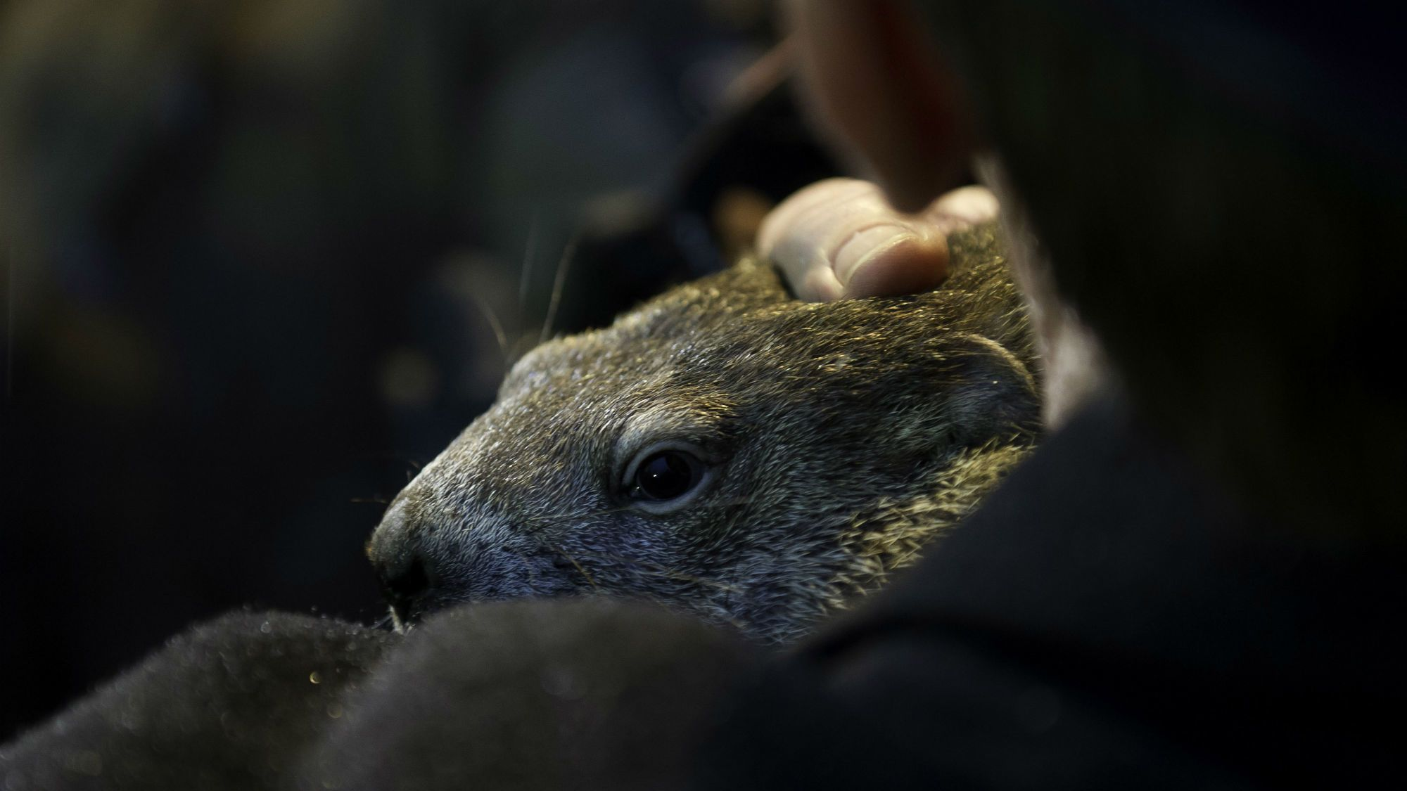Why Do We Use A Groundhog To Forecast The Weather