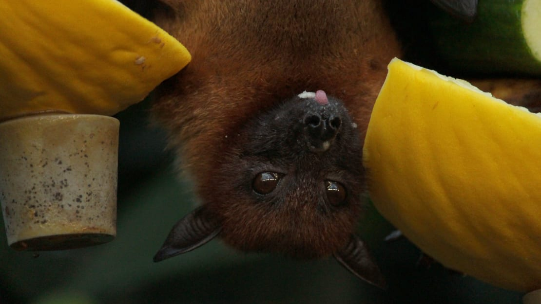 Bats can get cranky when they're being bothered by other bats.
